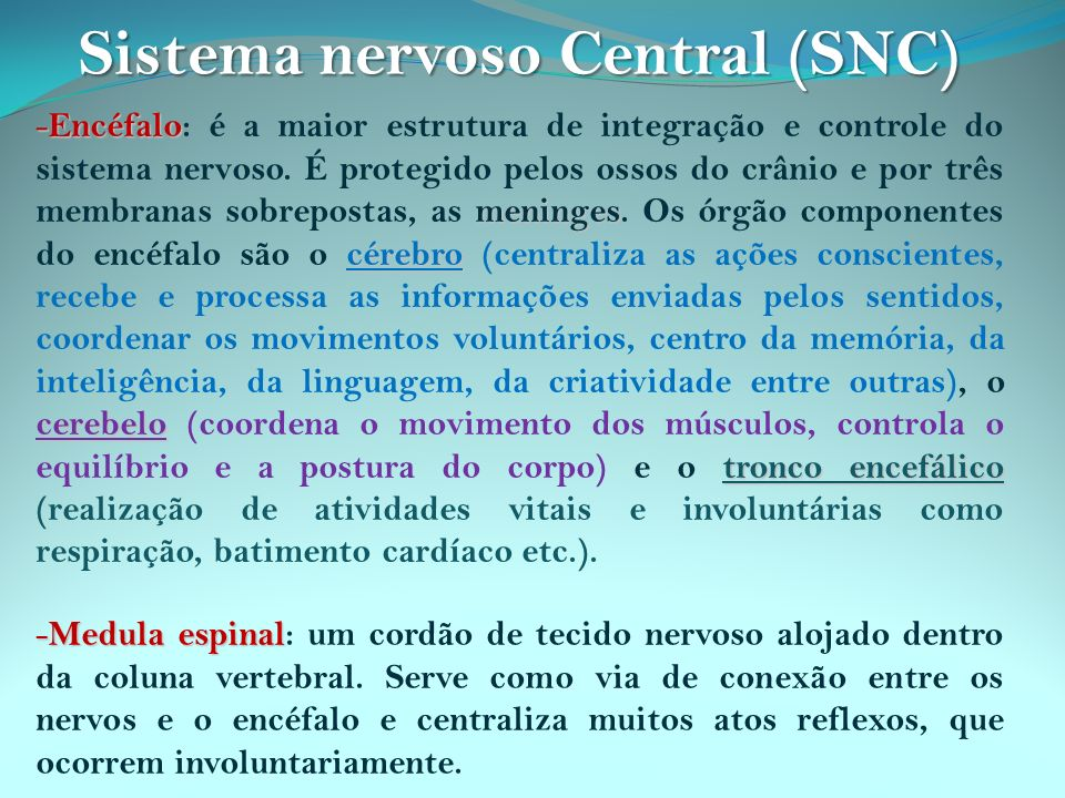 - Encéfalo meninges cérebro cerebelo tronco encefálico - Encéfalo: é a maior estrutura de integração e controle do sistema nervoso. É protegido pelos