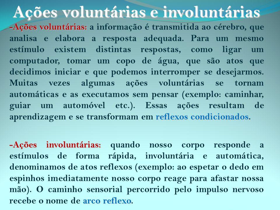 -Ações voluntárias: reflexos condicionados -Ações voluntárias: a informação é transmitida ao cérebro, que analisa e elabora a resposta adequada. Para