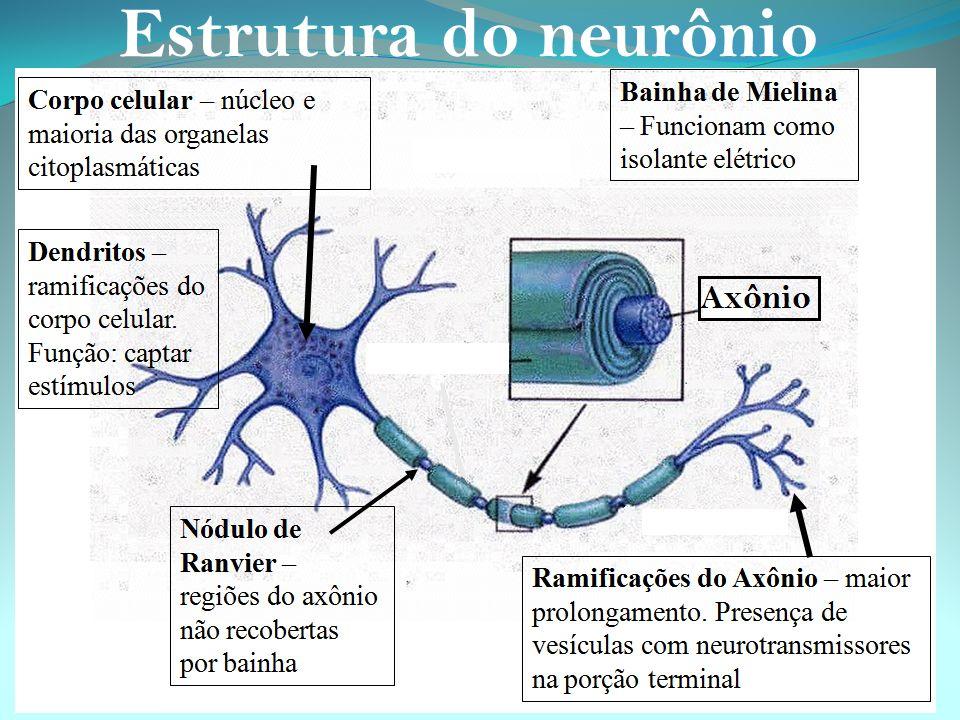 Dependendo da forma como atuam no organismo, os neurônios podem ser classificados em: - Sensoriais: - Sensoriais: levam as informações dos órgãos dos sentidos (olhos, orelhas, receptores do paladar, tato e olfato) até o sistema nervoso central.
