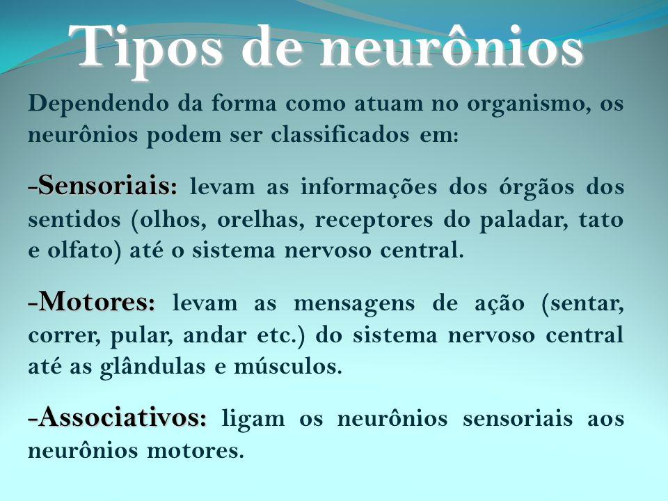Dependendo da forma como atuam no organismo, os neurônios podem ser classificados em: - Sensoriais: - Sensoriais: levam as informações dos órgãos dos