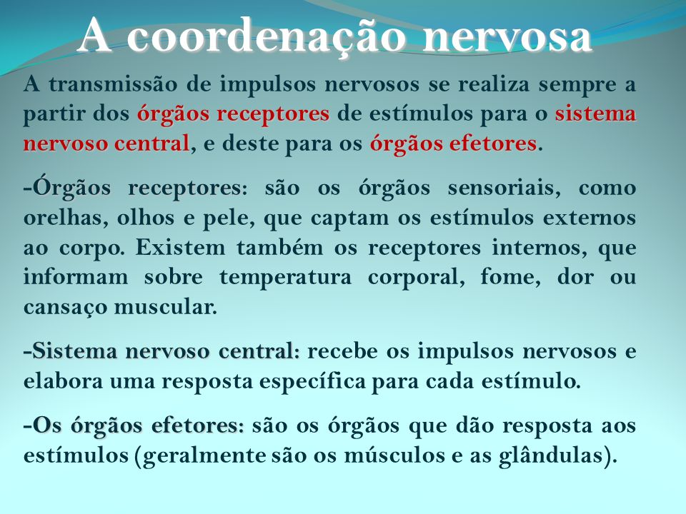 órgãos receptores sistema nervoso centralórgãos efetores A transmissão de impulsos nervosos se realiza sempre a partir dos órgãos receptores de estímu