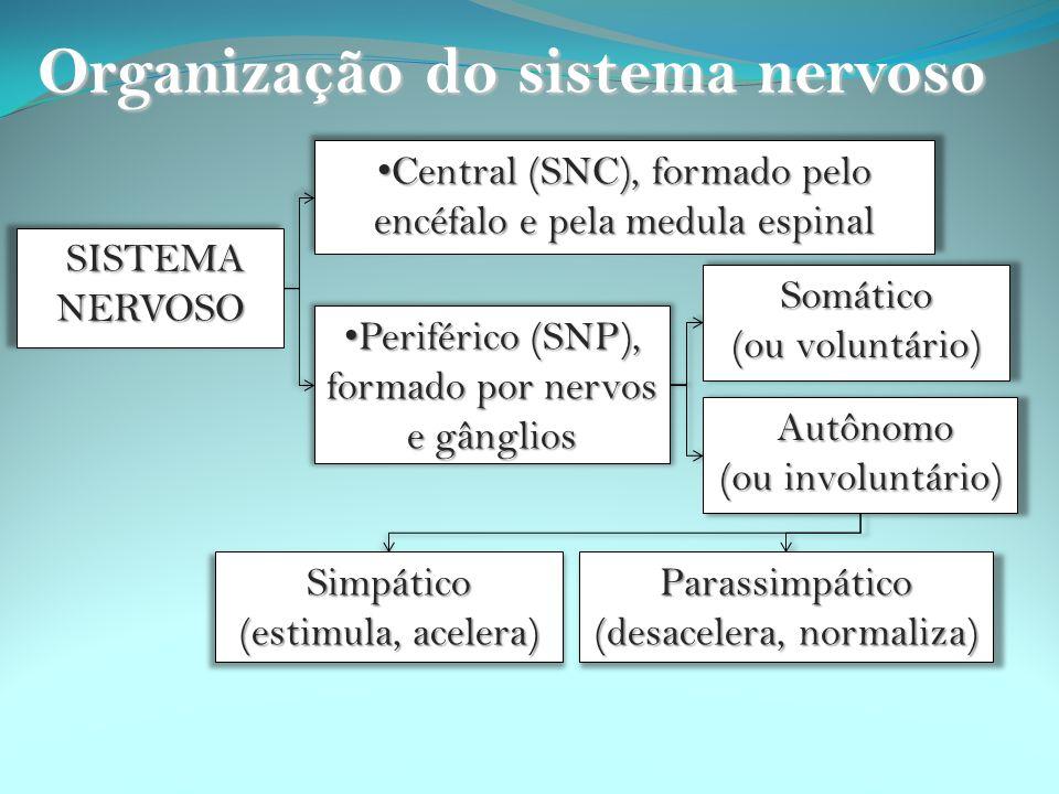 O sistema nervoso se divide em duas partes: Sistema nervoso Central (SNC) - O Sistema nervoso Central (SNC): formado pelo encéfalo e pela medula espinal.