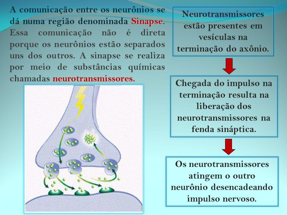 Sistema nervoso Central (SNC) e Periférico (SNP)