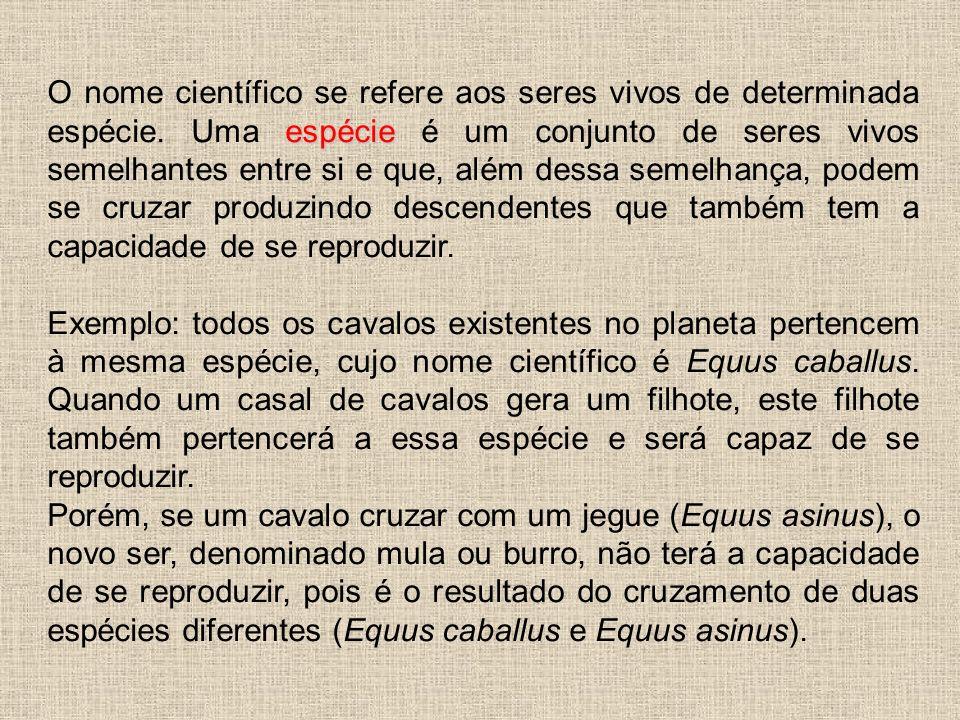 BIOMAS BRASILEIROS BrasilBiomas O Brasil tem seu território ocupado por seis grandes Biomas terrestres: AmazôniaAmazônia, cujo domínio ocupa 49,29% do território nacional; Cerrado, cujo domínio ocupa 23,92% do território; Cerrado Mata AtlânticaMata Atlântica, cujo domínio ocupa 13,04% do território nacional; Caatinga, cujo domínio ocupa 9,92% do território nacional; Pampa ou campos sulinos, cujo domínio ocupa 2,07% do território nacional; Pantanal, cujo domínio ocupa 1,76% do território nacional.