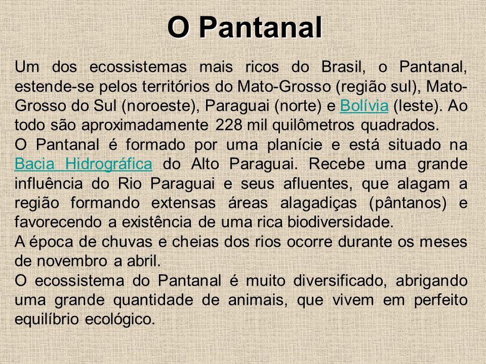 O Pantanal Um dos ecossistemas mais ricos do Brasil, o Pantanal, estende-se pelos territórios do Mato-Grosso (região sul), Mato- Grosso do Sul (noroes