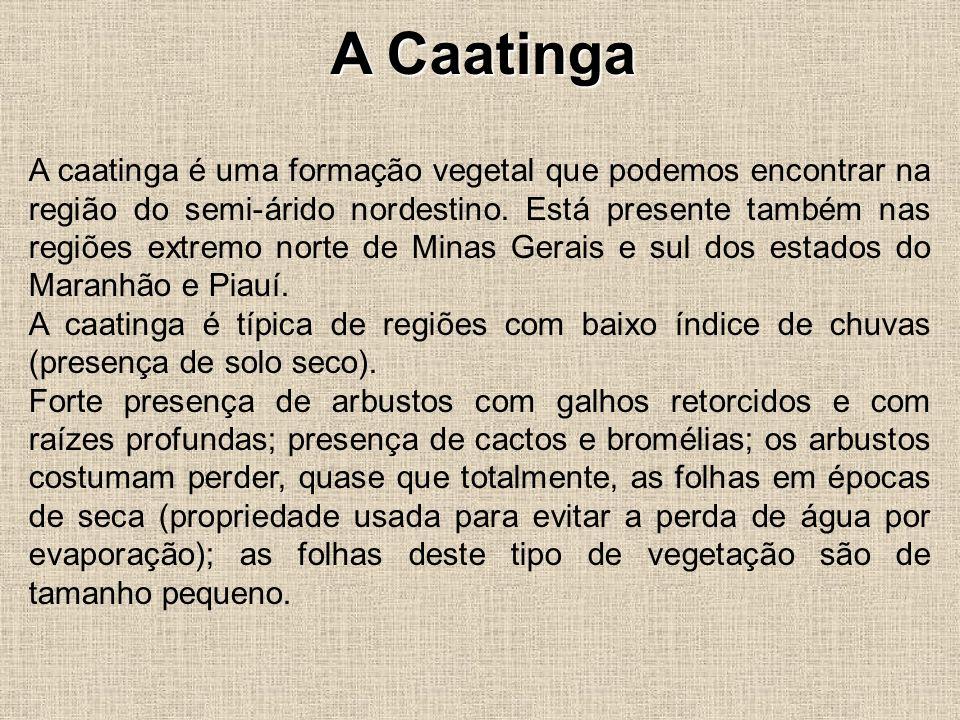 A Caatinga A caatinga é uma formação vegetal que podemos encontrar na região do semi-árido nordestino. Está presente também nas regiões extremo norte