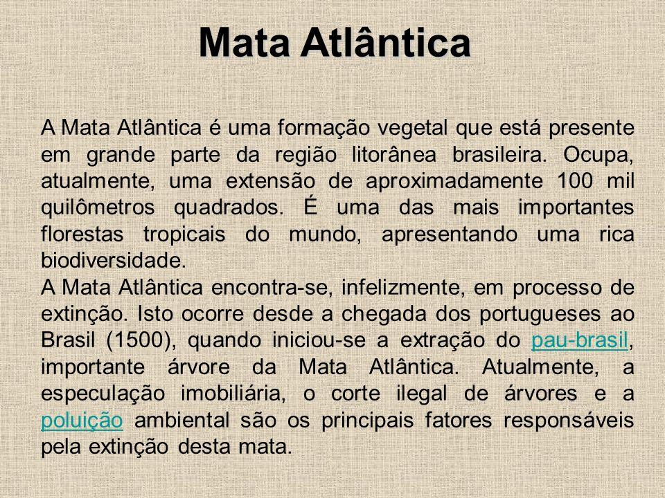 A Mata Atlântica é uma formação vegetal que está presente em grande parte da região litorânea brasileira. Ocupa, atualmente, uma extensão de aproximad