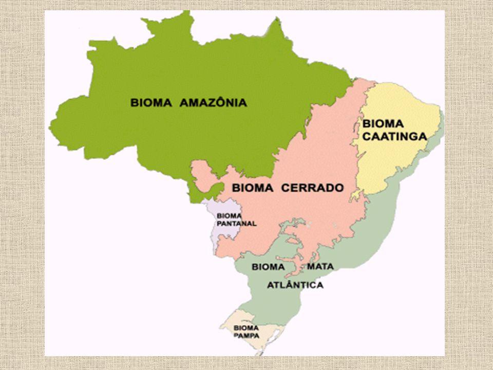 A Amazônia A maior parte da floresta está presente em território brasileiro (estados do Amazonas, Amapá, Rondônia, Acre, Pará e Roraima).