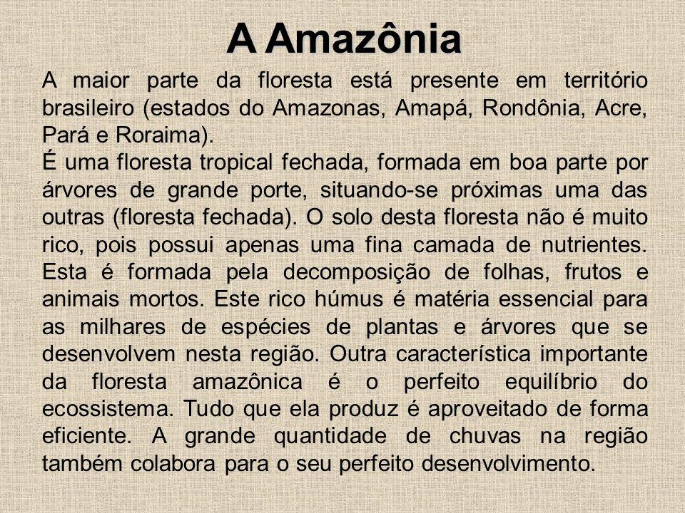 A Amazônia A maior parte da floresta está presente em território brasileiro (estados do Amazonas, Amapá, Rondônia, Acre, Pará e Roraima). É uma flores