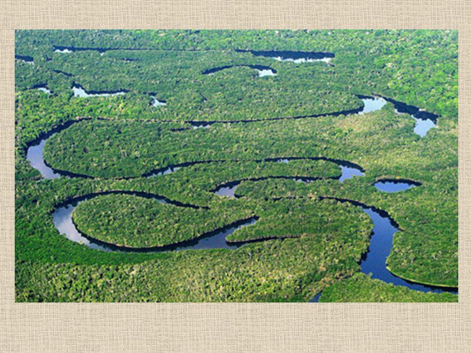 O Cerrado Presença marcante de árvores de galhos tortuosos e de pequeno porte; as raízes destes arbustos são profundas (propriedade para a busca de água em regiões profundas do solo, em épocas de seca); as cascas destas árvores são duras e grossas.