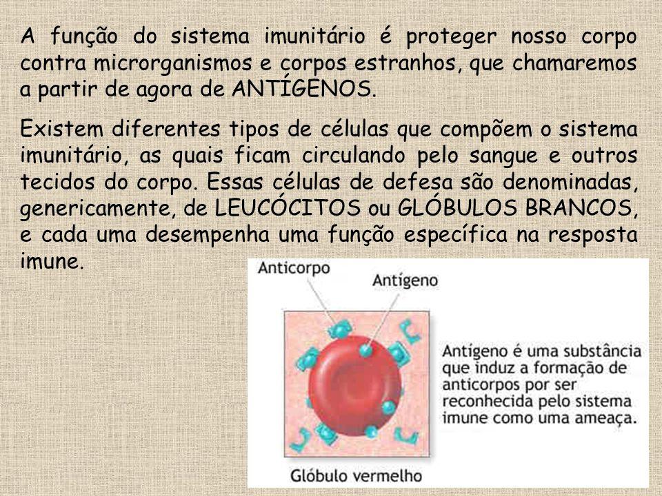 A função do sistema imunitário é proteger nosso corpo contra microrganismos e corpos estranhos, que chamaremos a partir de agora de ANTÍGENOS. Existem