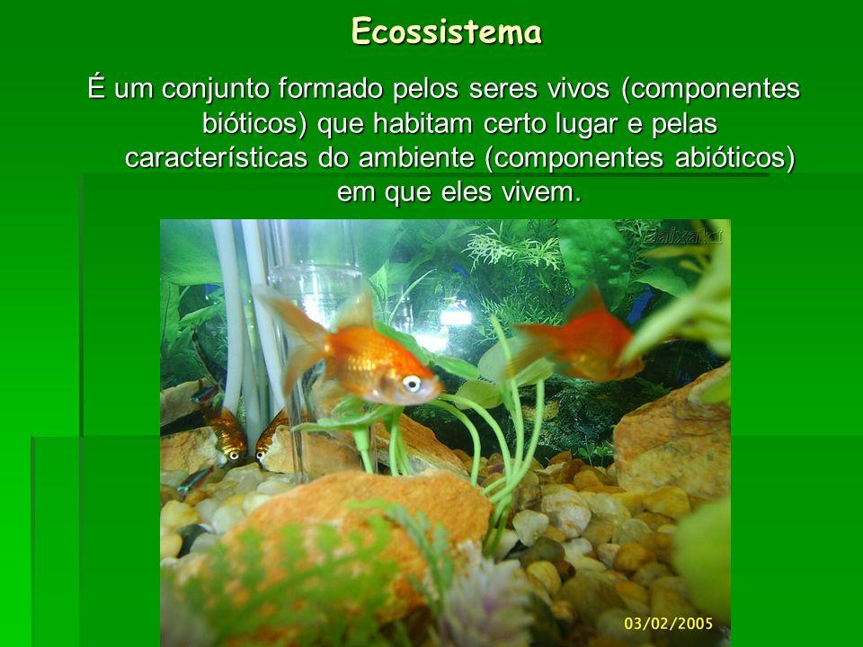 Ecossistema É um conjunto formado pelos seres vivos (componentes bióticos) que habitam certo lugar e pelas características do ambiente (componentes ab