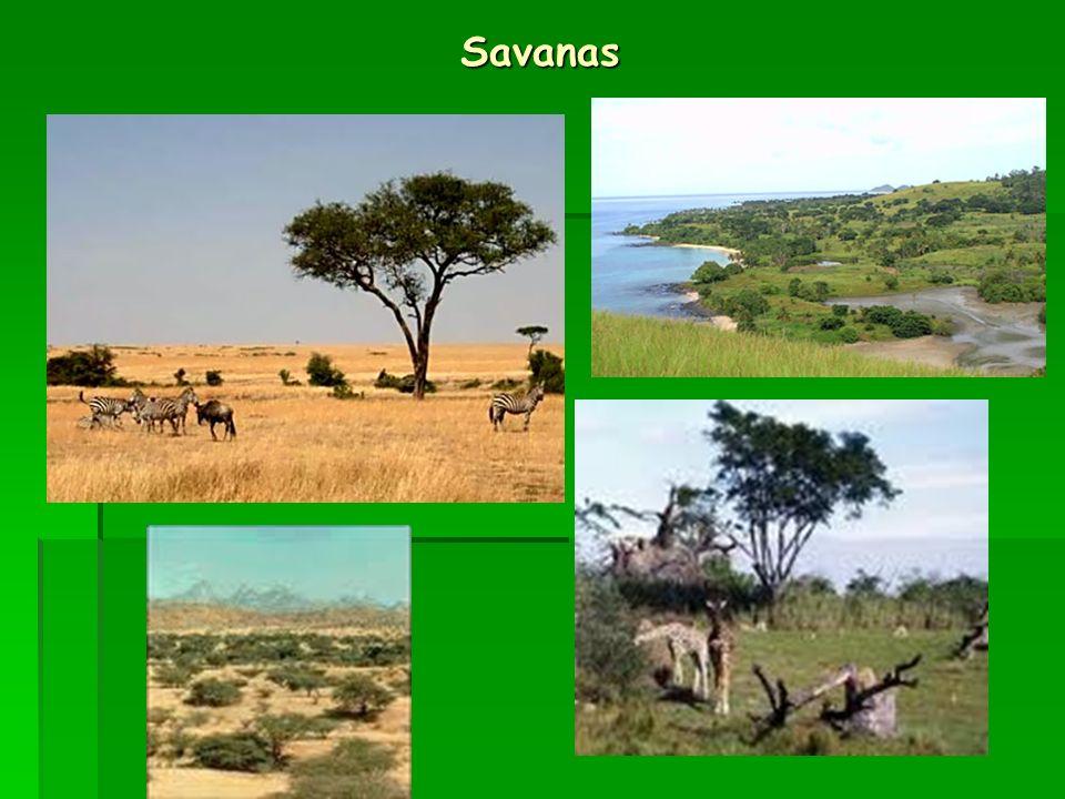 Savanas