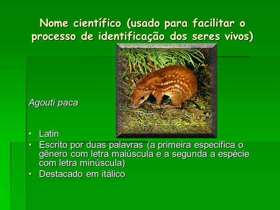 Nome científico (usado para facilitar o processo de identificação dos seres vivos) Agouti paca LatinLatin Escrito por duas palavras (a primeira especi