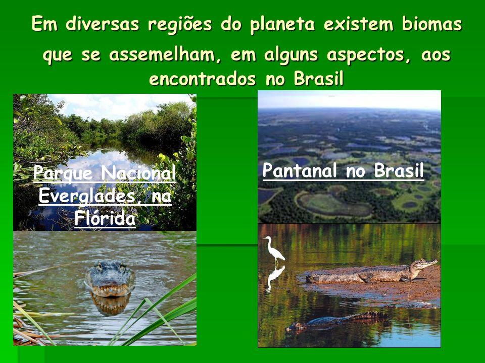 Em diversas regiões do planeta existem biomas que se assemelham, em alguns aspectos, aos encontrados no Brasil Parque Nacional Everglades, na Flórida