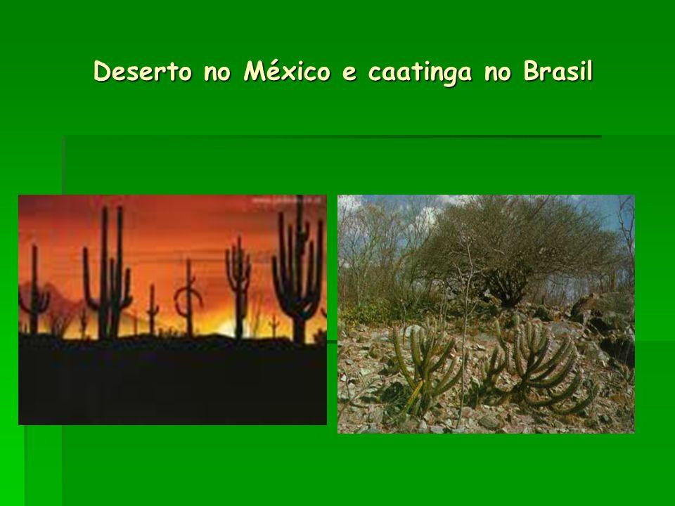 Deserto no México e caatinga no Brasil