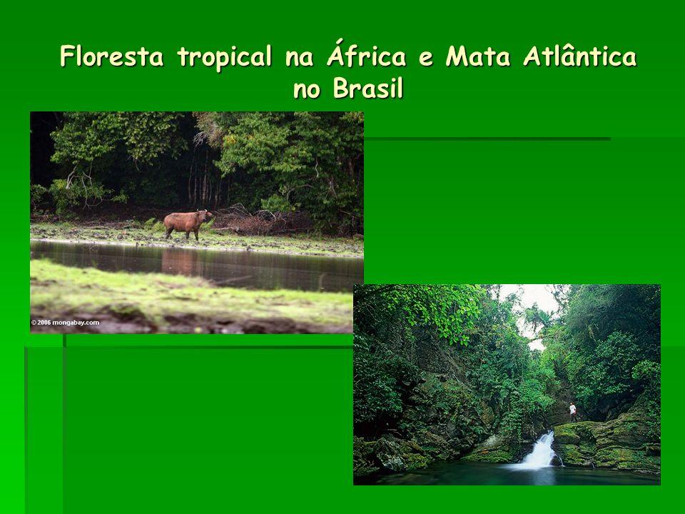 Floresta tropical na África e Mata Atlântica no Brasil