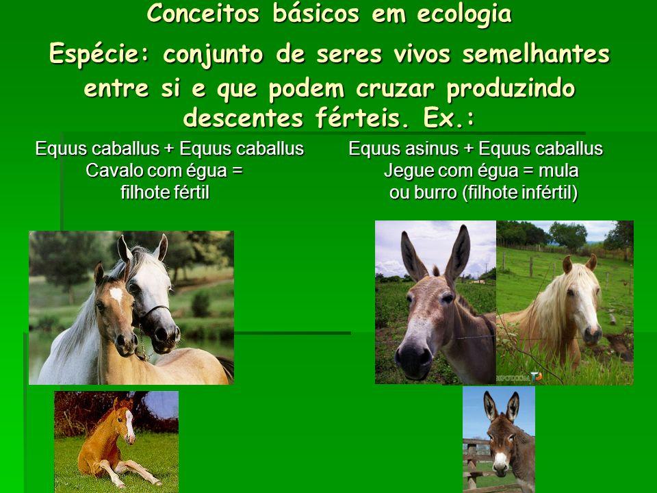 Conceitos básicos em ecologia Espécie: conjunto de seres vivos semelhantes entre si e que podem cruzar produzindo descentes férteis. Ex.: Equus caball