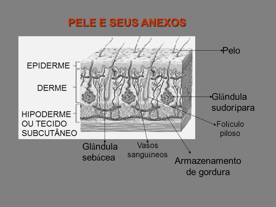 CÉLULAS DA EPIDERME -QUERATINÓCITOS: Produzem a queratina, que atua como barreira física contra microrganismos.