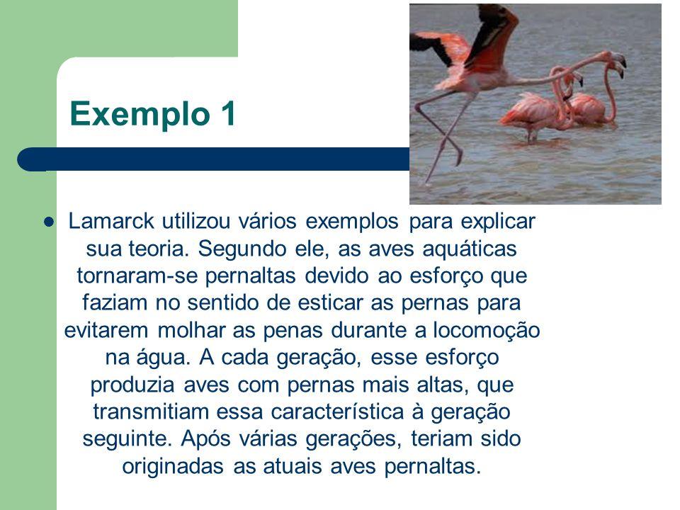 Exemplo 1 Lamarck utilizou vários exemplos para explicar sua teoria. Segundo ele, as aves aquáticas tornaram-se pernaltas devido ao esforço que faziam