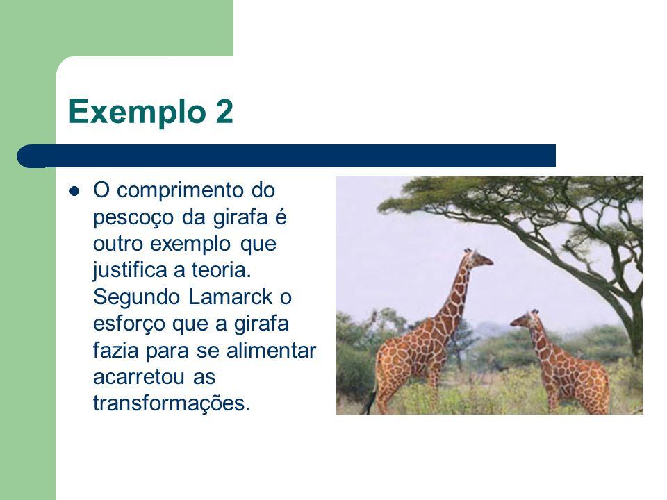 Exemplo 2 O comprimento do pescoço da girafa é outro exemplo que justifica a teoria. Segundo Lamarck o esforço que a girafa fazia para se alimentar ac