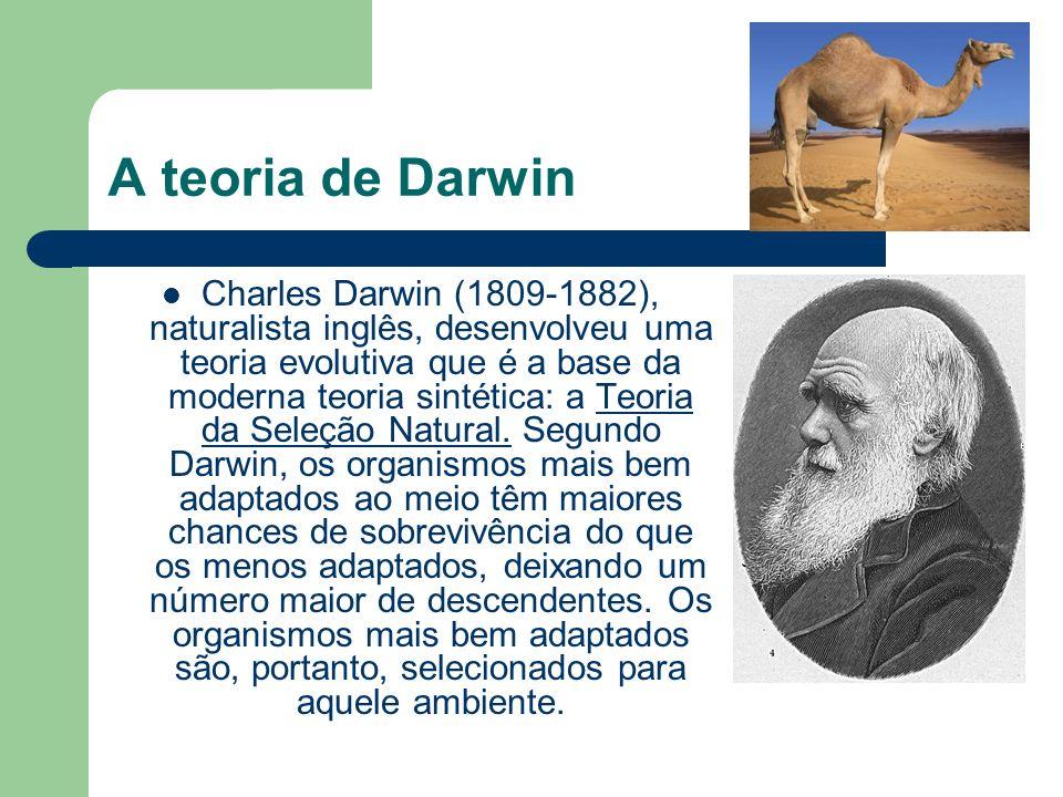A teoria de Darwin Charles Darwin (1809-1882), naturalista inglês, desenvolveu uma teoria evolutiva que é a base da moderna teoria sintética: a Teoria