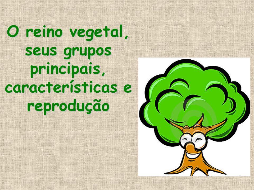 Características dos grupos das plantas BRIÓFITAS: BRIÓFITAS: Sua estrutura é bastante simples.