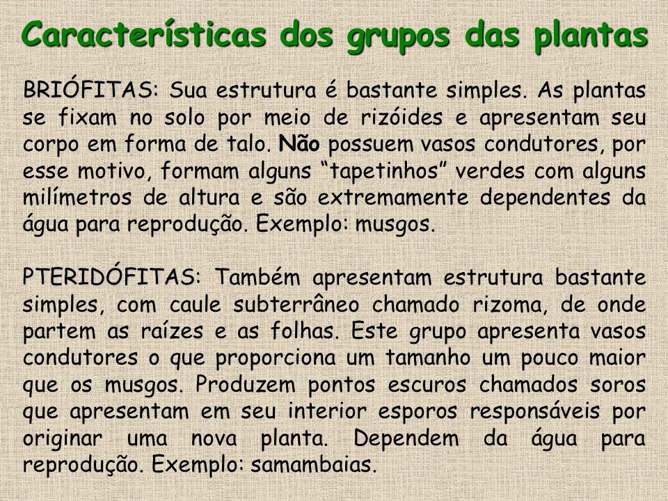 Características dos grupos das plantas GIMNOSPERMAS: GIMNOSPERMAS: Neste grupo surgiram as sementes, que são consideradas um fortaleza biológica, pois sua casca protege o embrião, o qual fica localizado dentro da semente.