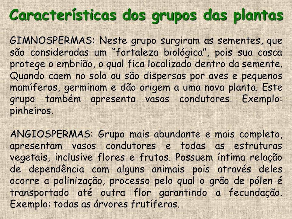 Características dos grupos das plantas GIMNOSPERMAS: GIMNOSPERMAS: Neste grupo surgiram as sementes, que são consideradas um fortaleza biológica, pois