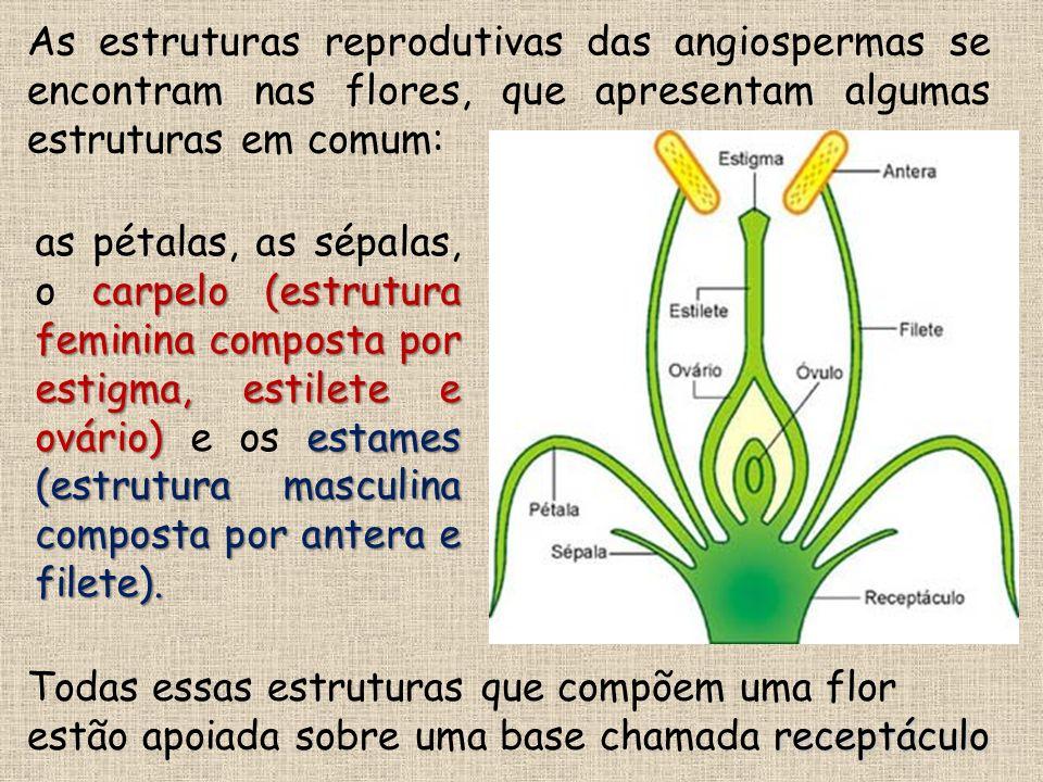 As estruturas reprodutivas das angiospermas se encontram nas flores, que apresentam algumas estruturas em comum: carpelo (estrutura feminina composta