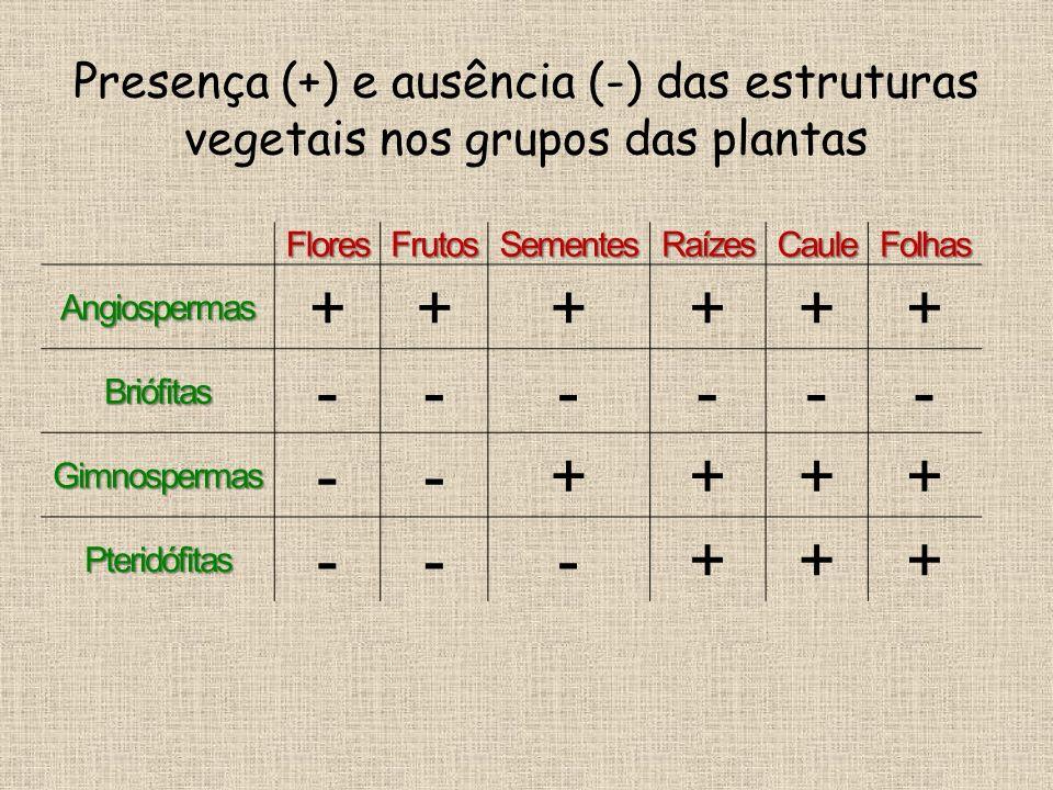 Presença (+) e ausência (-) das estruturas vegetais nos grupos das plantas FloresFrutosSementesRaízesCauleFolhas Angiospermas ++++++ Briófitas ------