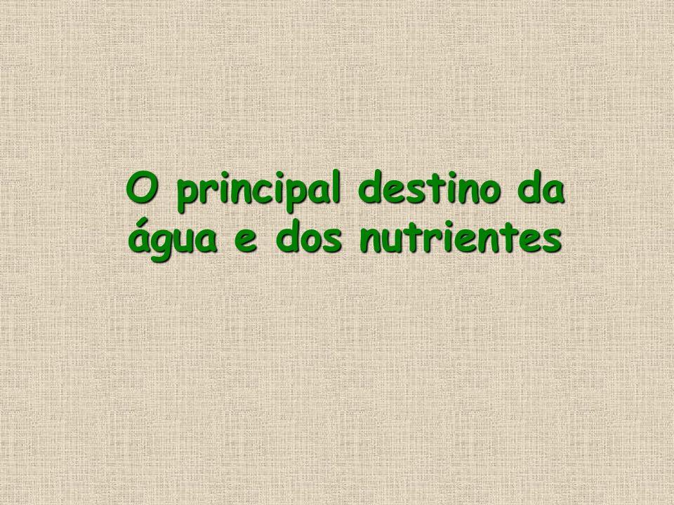 O principal destino da água e dos nutrientes