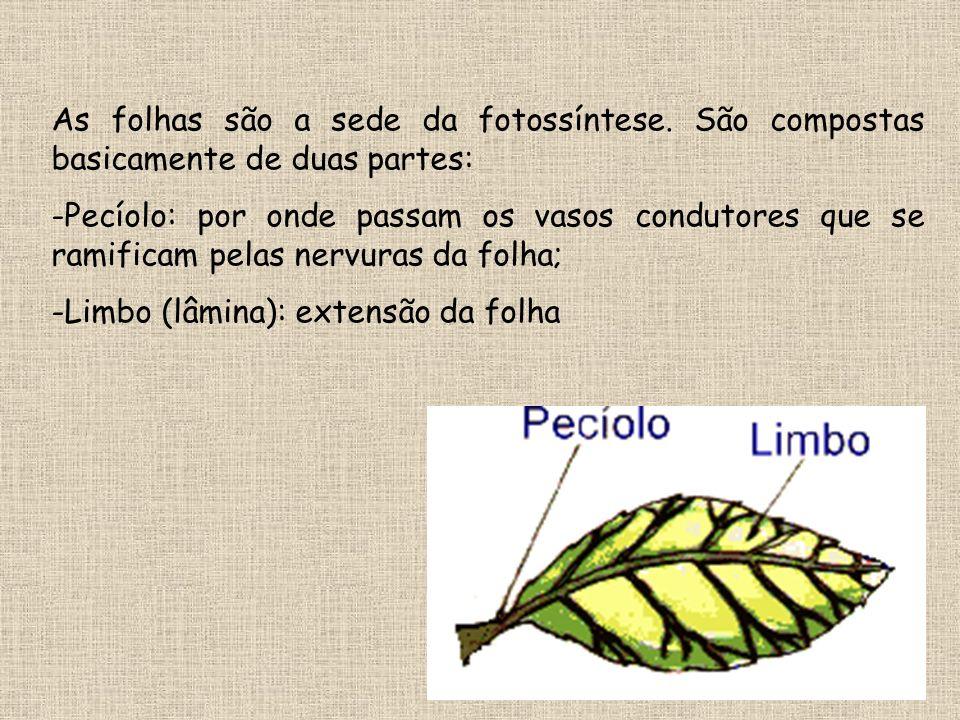As folhas são a sede da fotossíntese. São compostas basicamente de duas partes: -Pecíolo: por onde passam os vasos condutores que se ramificam pelas n