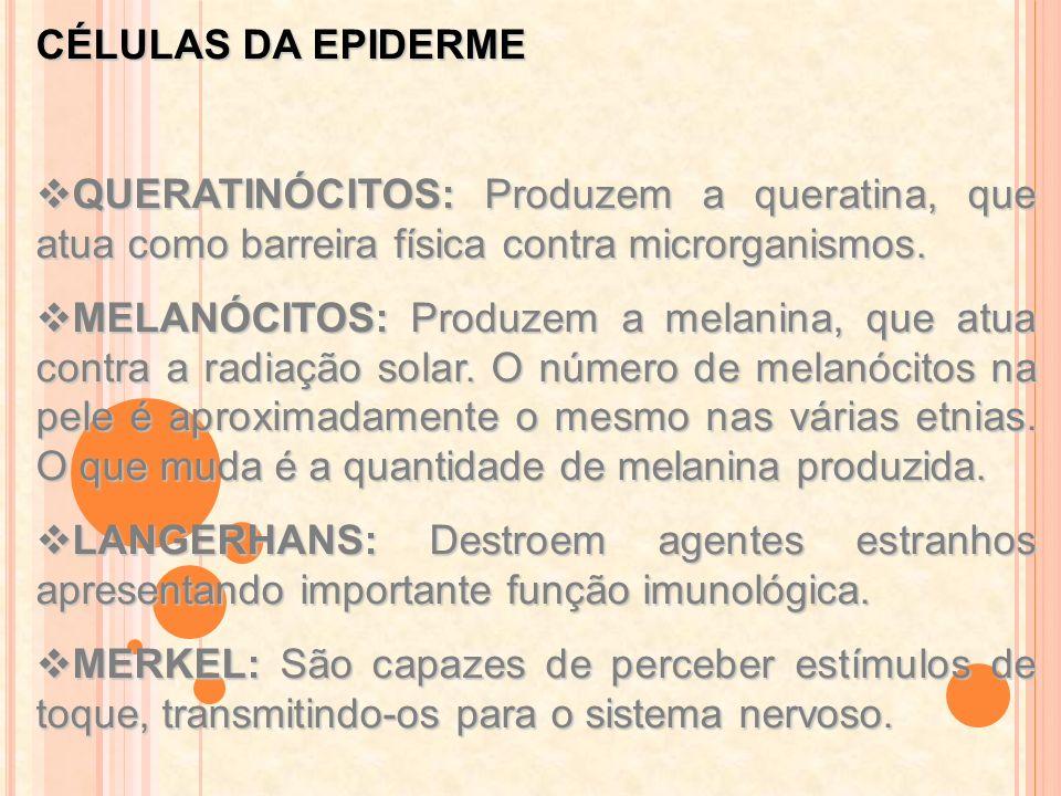 CÉLULAS DA EPIDERME QUERATINÓCITOS: Produzem a queratina, que atua como barreira física contra microrganismos. QUERATINÓCITOS: Produzem a queratina, q