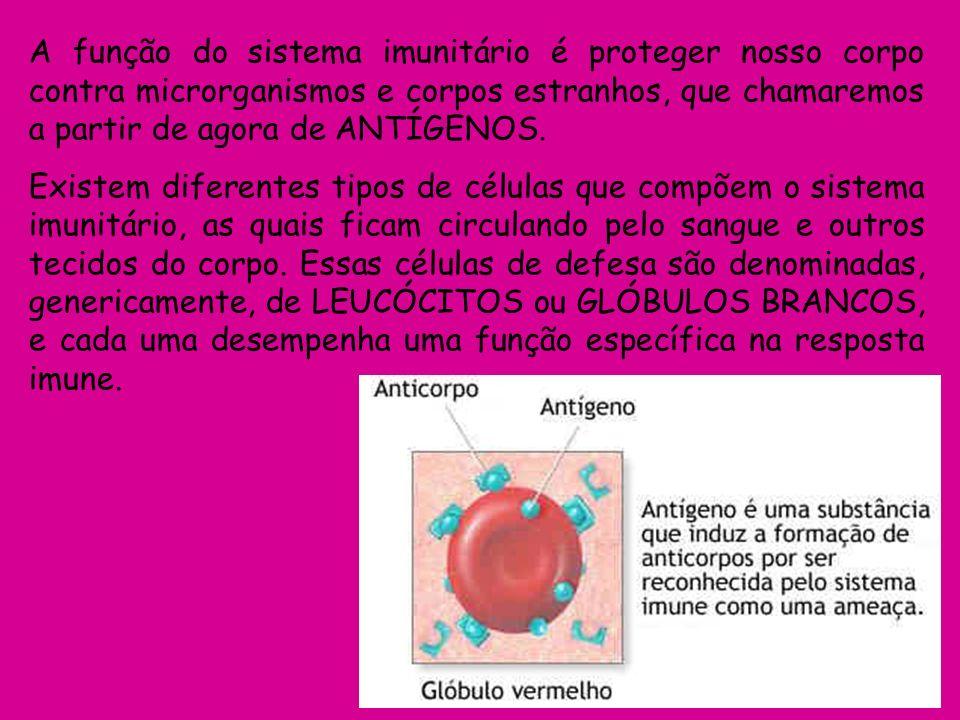TIPOS DE LEUCÓCITOS FUNÇÃO LOCAL ONDE SÃO PRODUZIDOS Macrófagos (ou monócitos) Devoram microrganismos, células mortas, resíduos, etc.