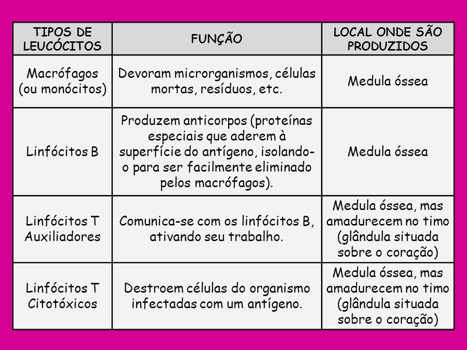 TIPOS DE LEUCÓCITOS FUNÇÃO LOCAL ONDE SÃO PRODUZIDOS Macrófagos (ou monócitos) Devoram microrganismos, células mortas, resíduos, etc. Medula óssea Lin