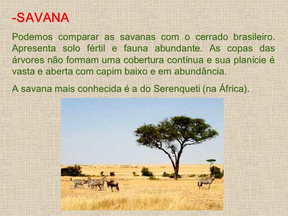 -SAVANA Podemos comparar as savanas com o cerrado brasileiro. Apresenta solo fértil e fauna abundante. As copas das árvores não formam uma cobertura c