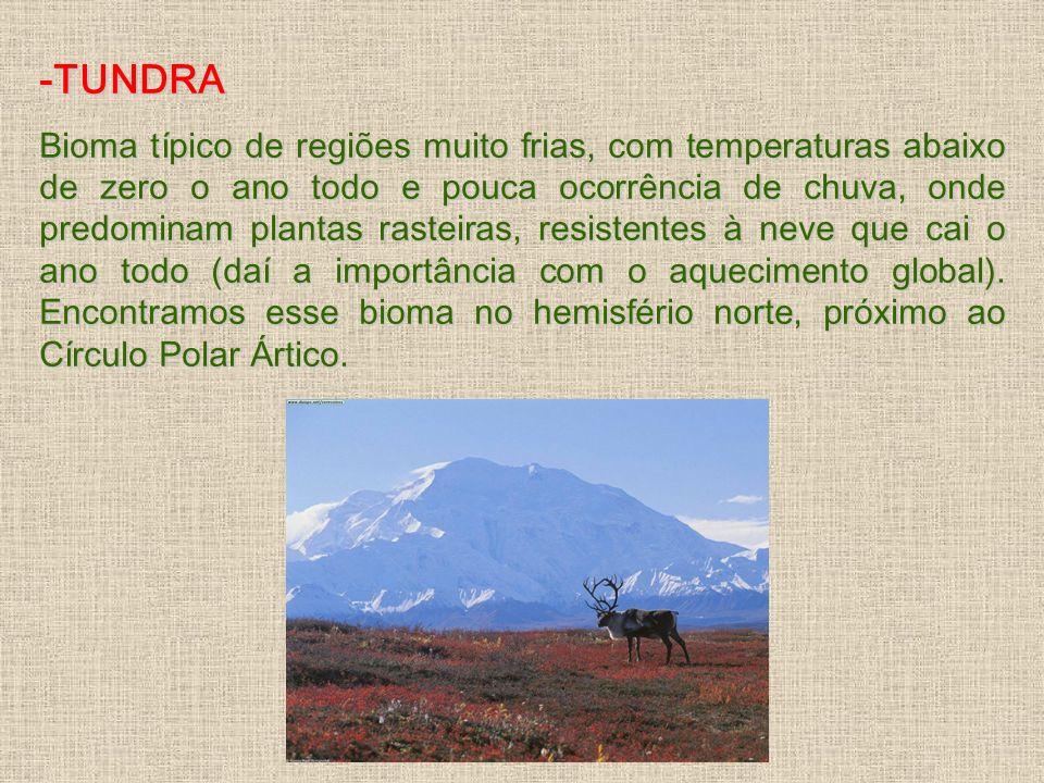 -TUNDRA Bioma típico de regiões muito frias, com temperaturas abaixo de zero o ano todo e pouca ocorrência de chuva, onde predominam plantas rasteiras