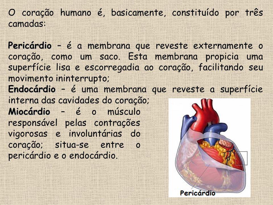 O coração humano é, basicamente, constituído por três camadas: Pericárdio Pericárdio – é a membrana que reveste externamente o coração, como um saco.