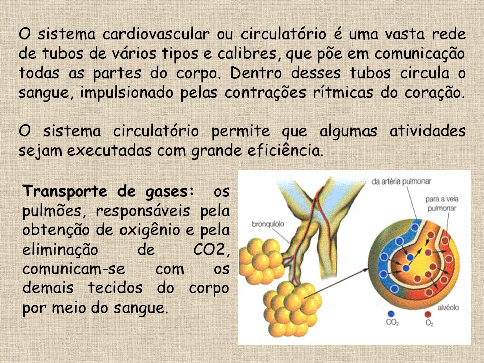 Podemos dividir o trajeto do sangue em duas metades: CORAÇÃO – CÉLULAS DO CORPO – CORAÇÃO O trajeto mais longo passa por todas as regiões do corpo.