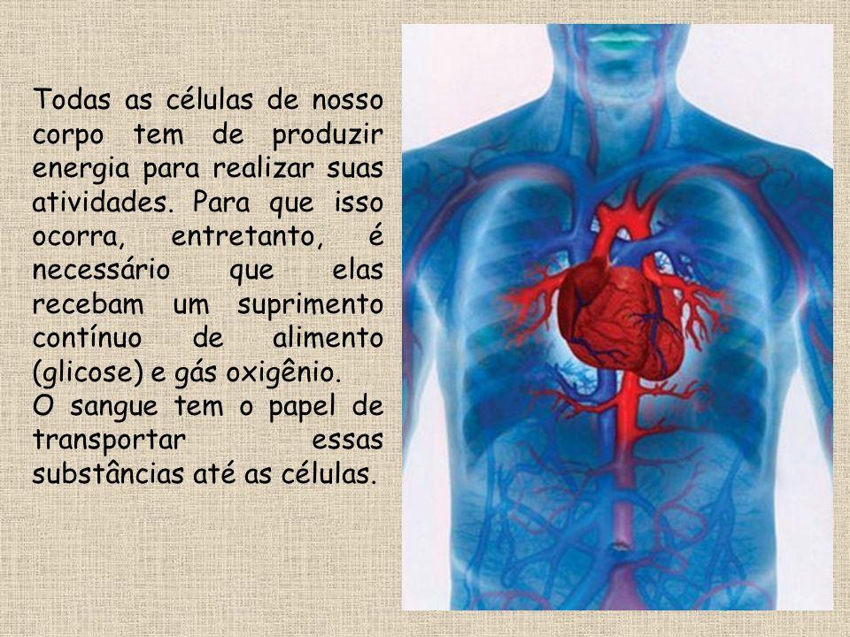 ANATOMIA DO CORAÇÃO A parede do coração é formada por uma musculatura chamada de MIOCÁRDIO.