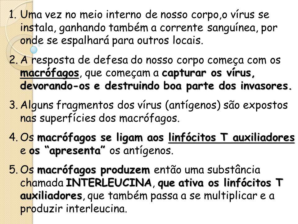 1.Uma vez no meio interno de nosso corpo,o vírus se instala, ganhando também a corrente sanguínea, por onde se espalhará para outros locais. macrófago