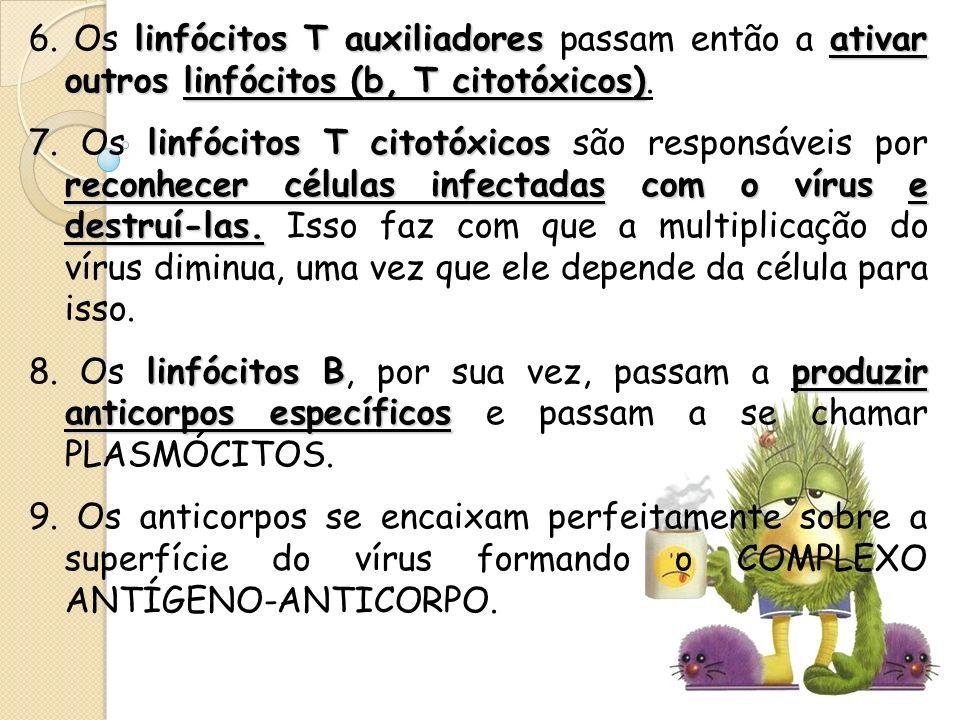 linfócitos T auxiliadores ativar outros linfócitos (b, T citotóxicos) 6. Os linfócitos T auxiliadores passam então a ativar outros linfócitos (b, T ci