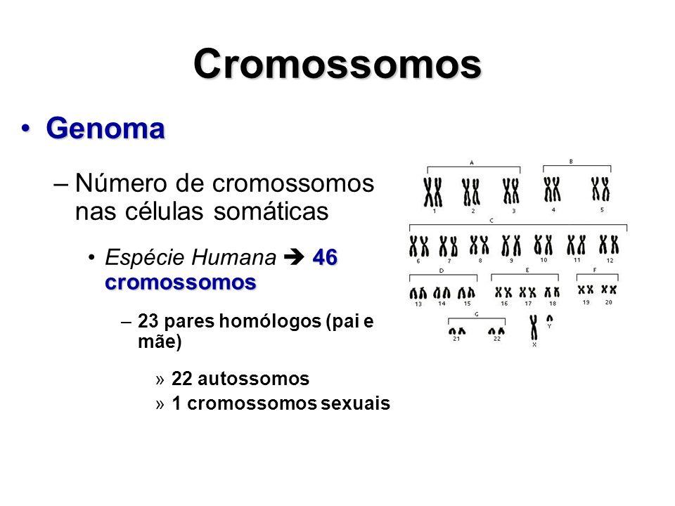 Cromossomos GenomaGenoma –Número de cromossomos nas células somáticas 46 cromossomosEspécie Humana 46 cromossomos –23 pares homólogos (pai e mãe) »22