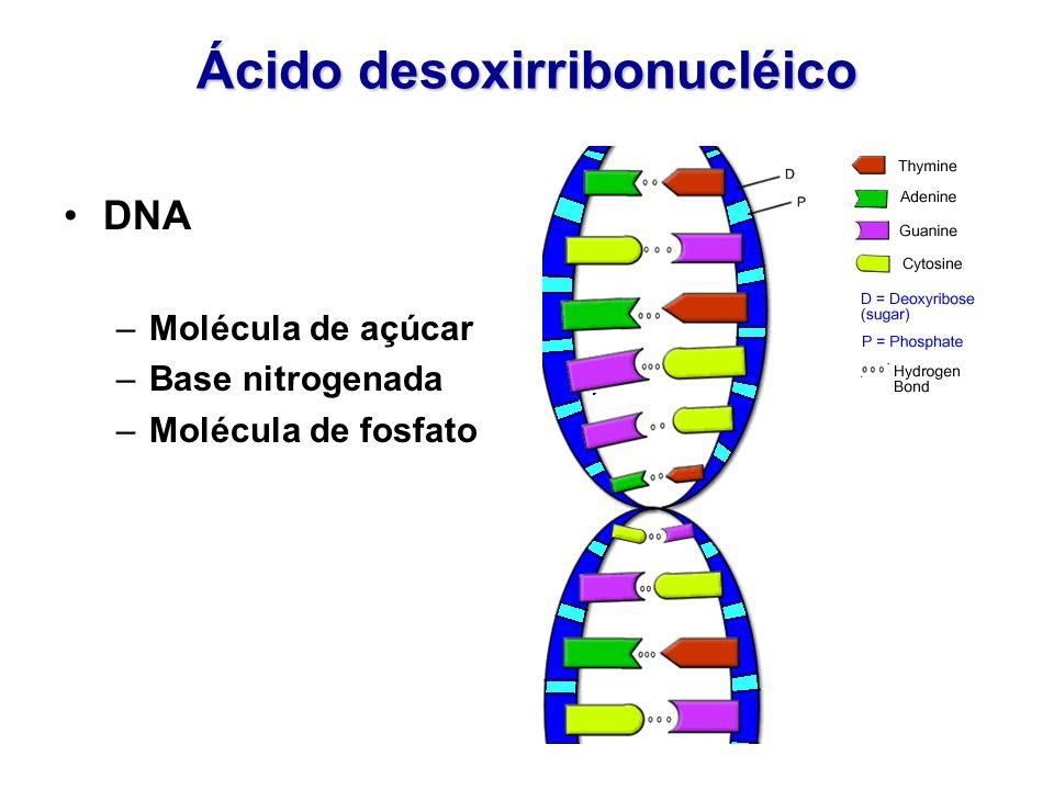 Ácido desoxirribonucléico DNA –Molécula de açúcar –Base nitrogenada –Molécula de fosfato