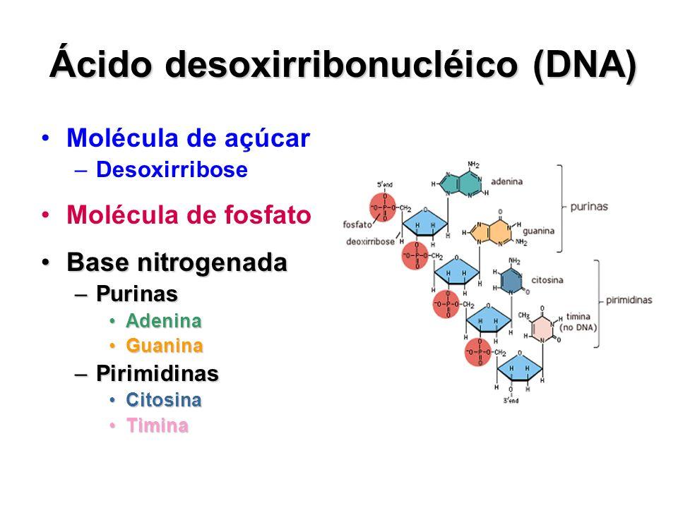 Ácido desoxirribonucléico (DNA) Molécula de açúcar –Desoxirribose Molécula de fosfato Base nitrogenadaBase nitrogenada –Purinas AdeninaAdenina Guanina