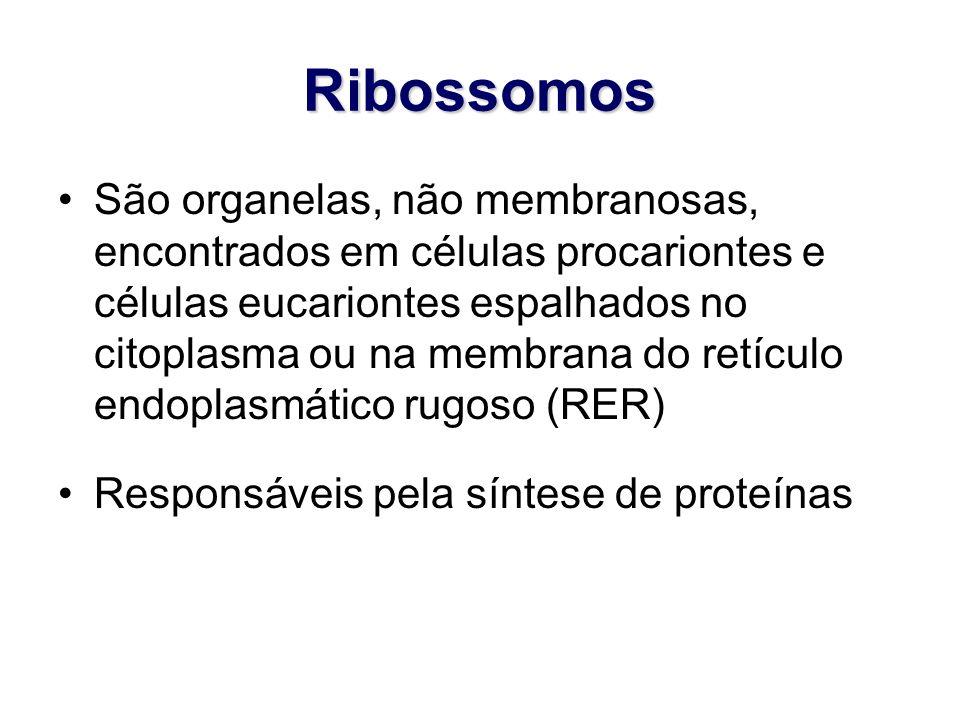 Ribossomos São organelas, não membranosas, encontrados em células procariontes e células eucariontes espalhados no citoplasma ou na membrana do retícu