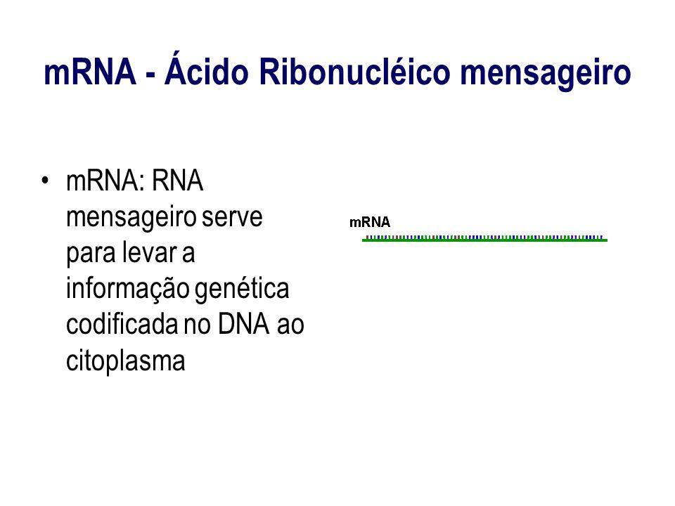 mRNA - Ácido Ribonucléico mensageiro mRNA: RNA mensageiro serve para levar a informação genética codificada no DNA ao citoplasma