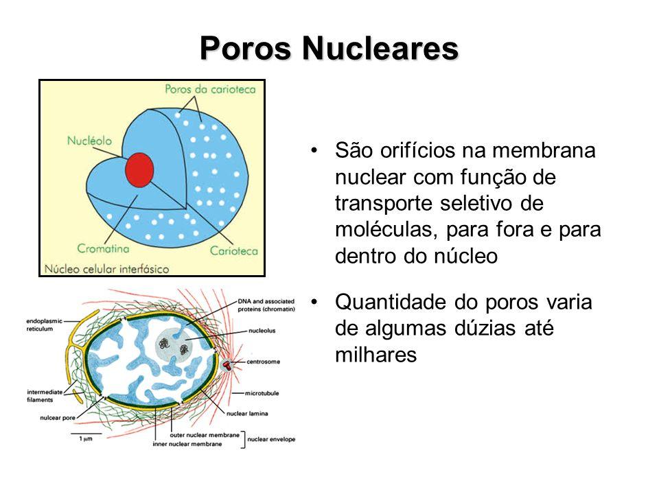 Fotomicrografias eletrônicas de núcleos de células eucariontes.