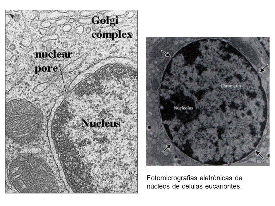 Complexo do Poro Nuclear Membrana nuclear externa e interna se unem Complexo do poro nuclearComplexo do poro nuclear Possui 8 unidades de monômeros protéicos cesta, com cerca de 100 nm de diâmetro
